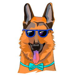 the of funny shepherd dog with the vector image