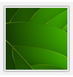 creative leaf background vector image vector image