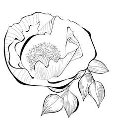 Black and white of stylized flower vector image