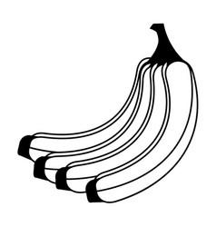 Banana fruit icon image vector