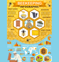Beekeeping honey collection apiary infographic vector