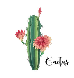 cactus in desert and hand vector image