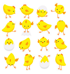 Eastern chicks in various poses isolated on white vector