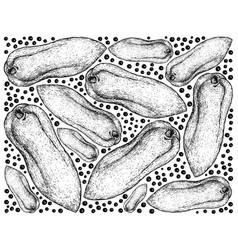 hand drawn background of fresh papaya fruits vector image