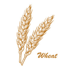wheat yellow sketch vector image