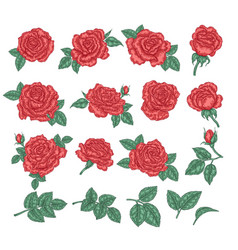 Collection red roses rose flowers leaves and vector