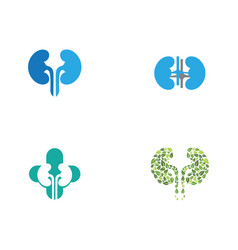 Kidney vector