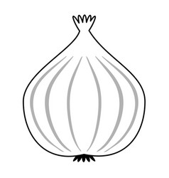 Onion vegetable icon image vector