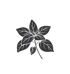 Oregano glyph icon vector