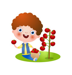 Red hair kid boy collect red fresh tomato vector