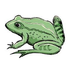 Toad amphibian animal vector