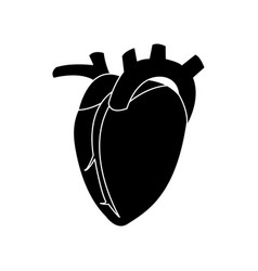 heart human organ healthy silhouette vector image