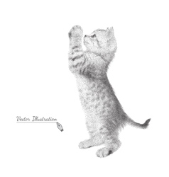 Kitten in black and white graphic style costs on vector image