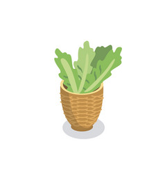 basket with fresh lettuce vector image