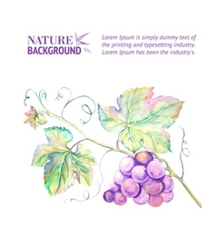 Card with grape leaves vector image