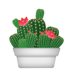 isolated cartoon decorative home plant cactus in vector image