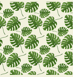 monstera plant seamless pattern on a white vector image