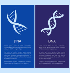 Dna set of white spirals isolated on blue backdrop vector