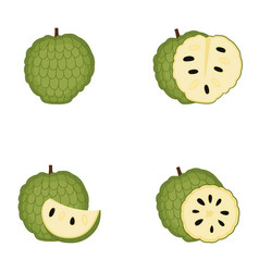 Sugar apple whole fruit slice vector