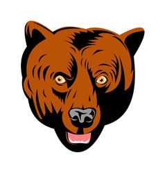 grizzly brown bear head facing front vector image