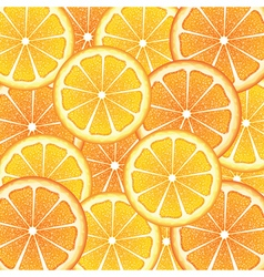 Various Citrus Slices7 vector