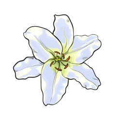 single hand drawn white lily flower top view vector image vector image