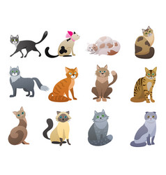 funny and cute cartoon cat different breeds vector image vector image