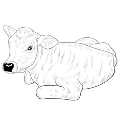 Adult coloring bookpage a cute calf image vector