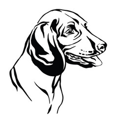 Decorative portrait bavarian mountain hound vector