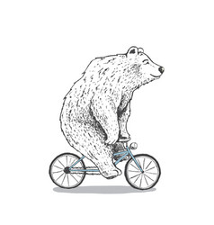 polar bear is riding a bicycle vector image