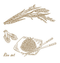rise set hand drawn rice plant vector image