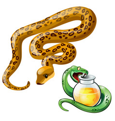 two snakes and bottle of poison vector image