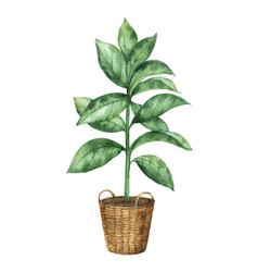 Watercolor clipart with a ficus in a vector