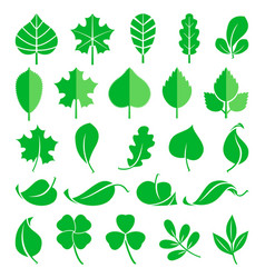 growing plants leaf and grass shoots vector image vector image