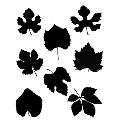 grape leaf vector image