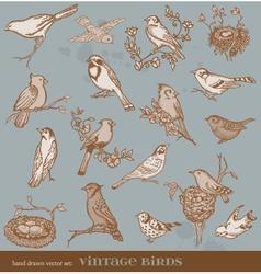 Hand drawn set birds vector image vector image