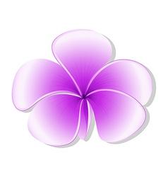 A fresh five-petal flowering plant vector