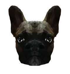 french bulldog in low poly vector image