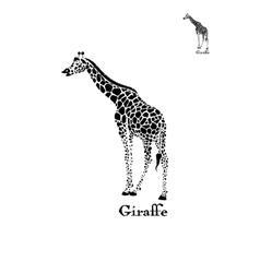 giraffe logo Wild animal vector image
