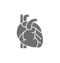 Heart artery vein human organ grey icon vector