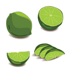 set of fresh lime and slices of fresh lime vector image