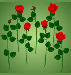 set of red roses on green background vector image