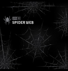 spider webs on black background vector image
