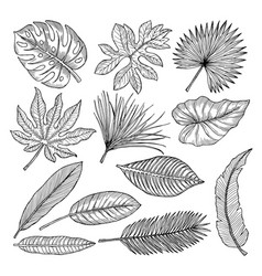 Tropical leaves and plants hand drawing vector