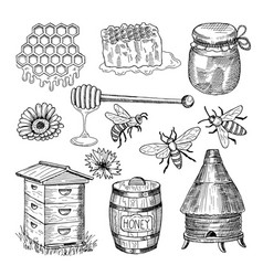 honey bee honeycomb and other thematically hand vector image vector image