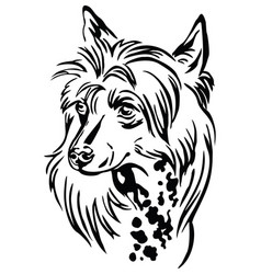 Decorative portrait chinese crested dog vector