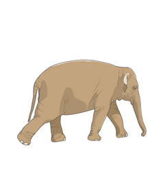 Isolated brown elephant animal character walking vector