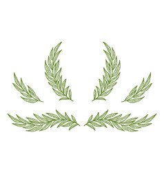vintage olive branches twig and wreath set vector image