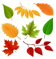 Autumn colors leaves set vector image vector image
