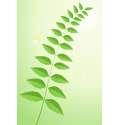 Plant leaves vector